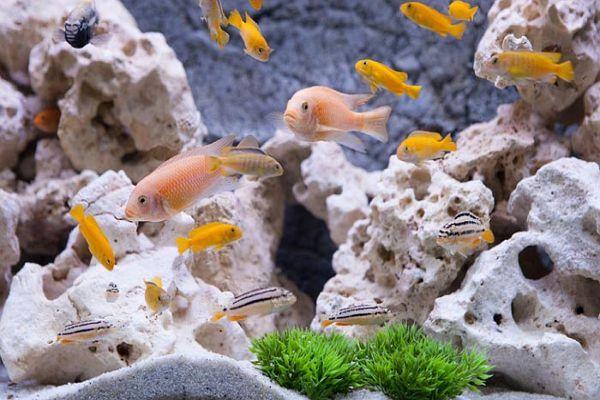اثر پوکه معدنی در حذف یون های سنگین آب برای پرورش ماهی