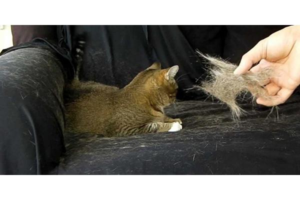 رفع موهای حیوان خانگی