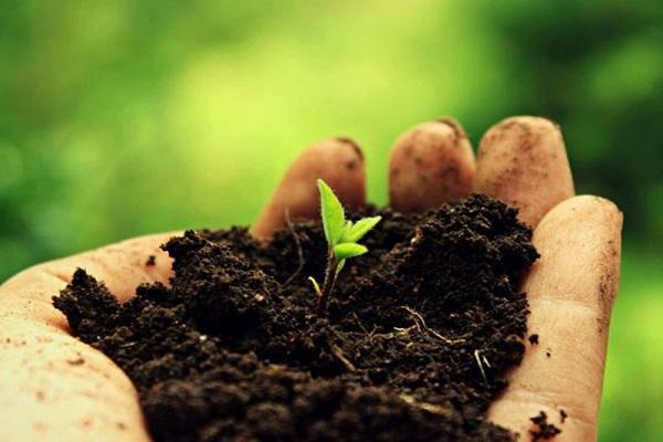 تقویت خاک باغچه